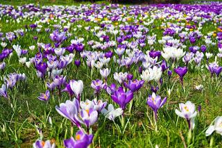 Frühlingsgefühle - Gedicht